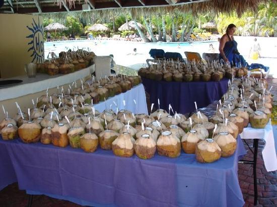 Catalonia Bavaro Beach Golf Resort Drinks In Coconuts