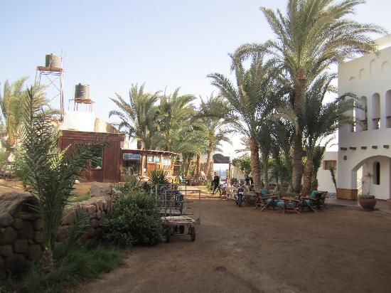 Dahab Divers South Sinai Hotel & Dive center: Dahab Divers - view of hotel