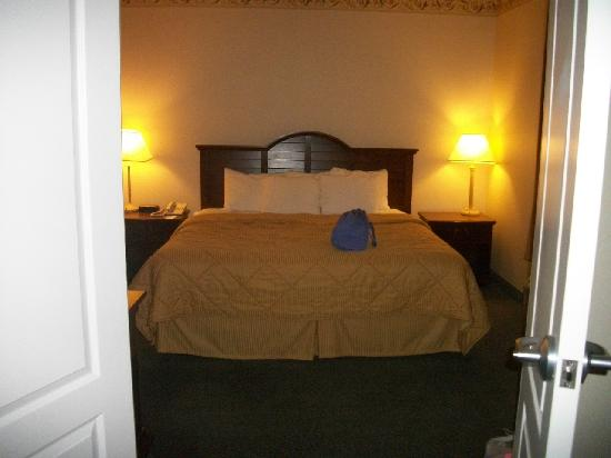 Comfort Inn & Suites Dover: Our delicious bed