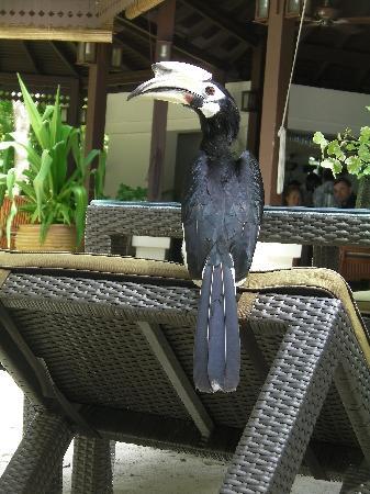 Pangkor Laut Resort: local wildlife