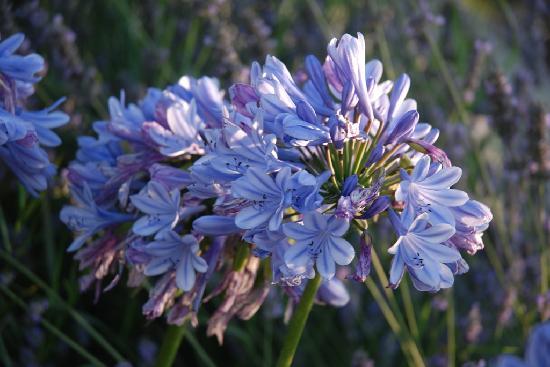 Manoir de l'Epine: Fiori del giardino interno
