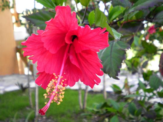 Shannas Cove Resort: Shannas' Cove Flower Garden