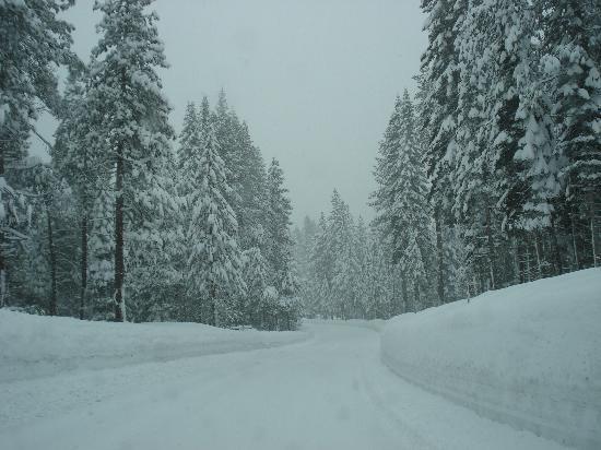 Blackberry Inn at Yosemite: on the road to Yosemite!