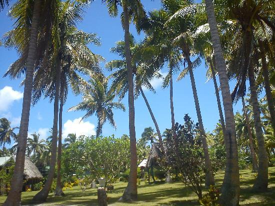 Otto and Fanny's Place: Coconut Trees