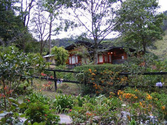Casa Grande Bambito Highlands Resort : bosque