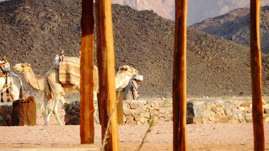 Bei Beduinen im Rote-Meer-Gebirge westlich von Hurghada