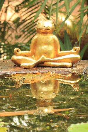 Assagao, อินเดีย: Casa Meditationsfrosch September 2010