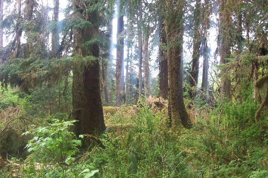 Hoh Rain Forest: some rays of sunlight filtering through