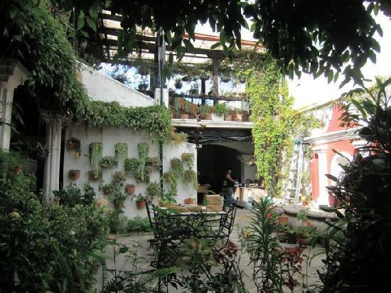 La Villa Serena: Patio