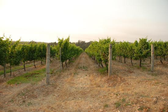 The Road Less Travelled Wine Tours: Back Roads 1
