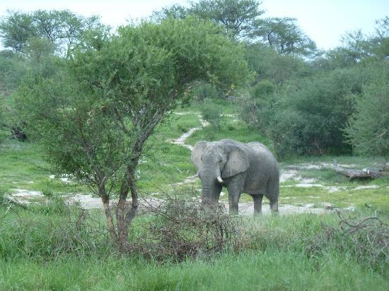 Elephant Sands Botswana: View from our chalet door