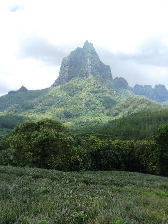 Moorea Explorer: Ananasplantage