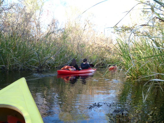 Everglades Rentals & Eco Adventures: Our kayaks