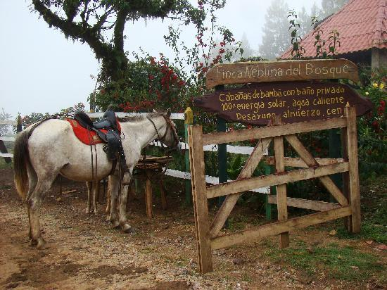 Esteli, Nicarágua: Entrada a la finca