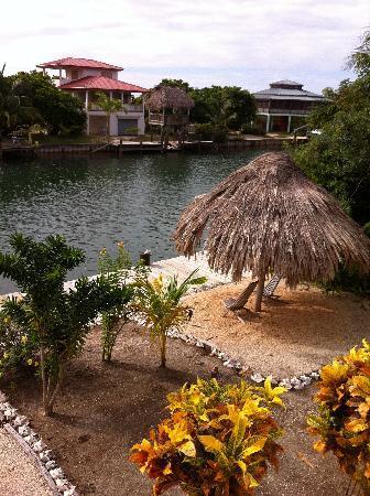 Three Iguanas Villa: Back yard from the patio.