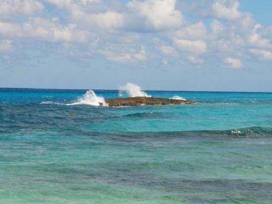 Melia Buenavista: Snorkeling reef (2nd beach area near the beach bar)