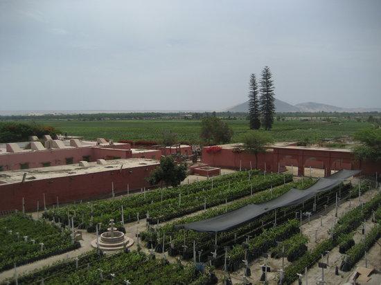Tacama: Vineyard