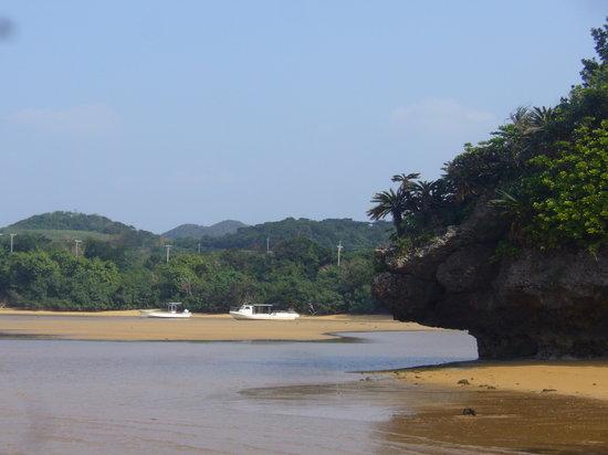 Komunitas tumbuhan Rhizophoraceae di Sungai Fukidogawa