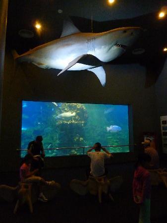 Parque de Diversiones Vinpearl: Underwater World