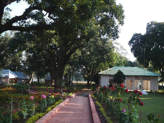 Champak Bungalow, Pachmarhi: the beautiful garden and the tents