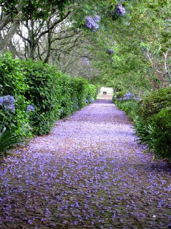 Malvern Manor Country Guest House: Secure drive in flower
