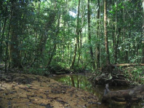 Sinharaja Forest Reserve Photo