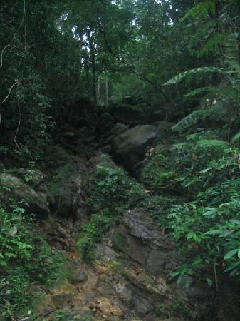 Sinharaja Forest Reserve: Sinharaja
