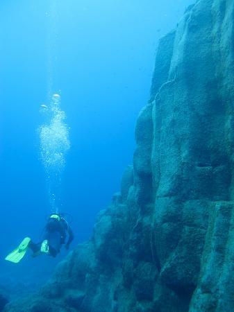 LJ Diving Tenerife: raie ténérife