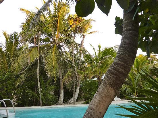 Hotel Jashita: Blick in den Garten