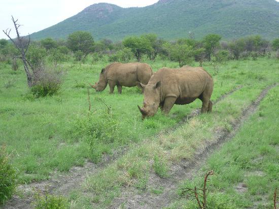 Impodimo Game Lodge: rhino