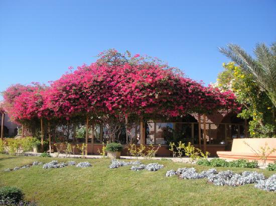 Hotel Sultan Bey Resort: resturant