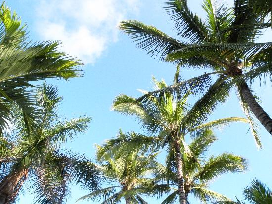 17 Palms Kauai: aloha