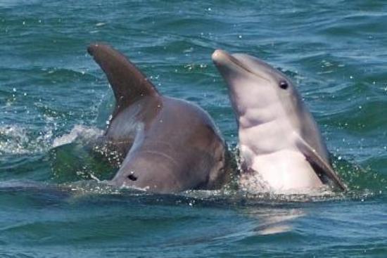 Mother Dolphin & Calf