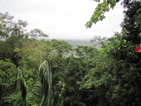 Belcampo Lodge: jungle