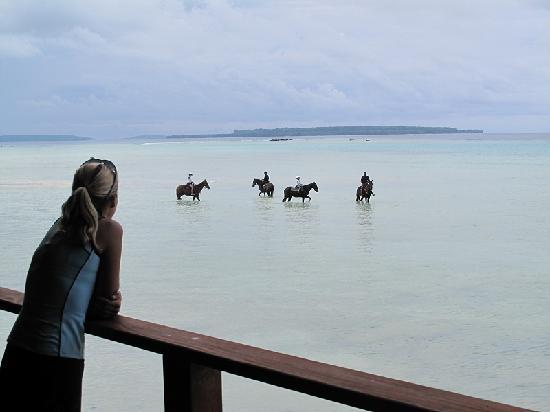 Espiritu Santo, Vanuatu: Megan watching her horses come in