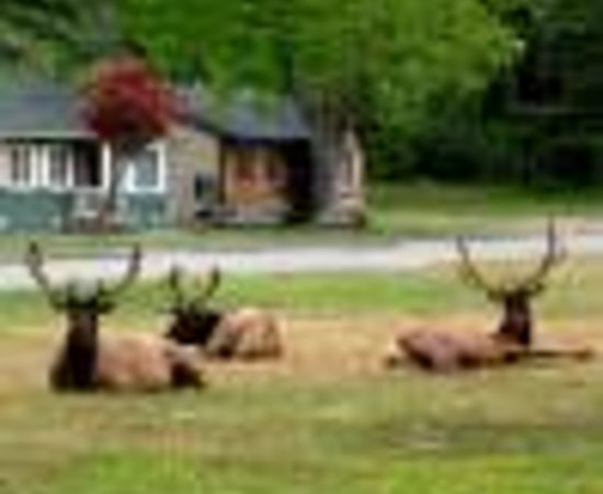 Elk Meadow Cabins: Redwood Adventures Vacation Village Thumbnail