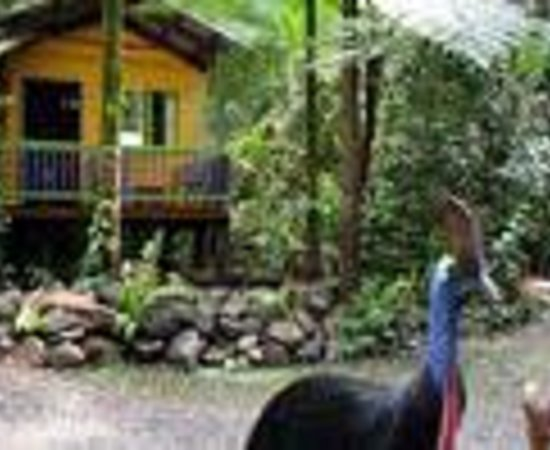 Rainforest Hideaway Thumbnail