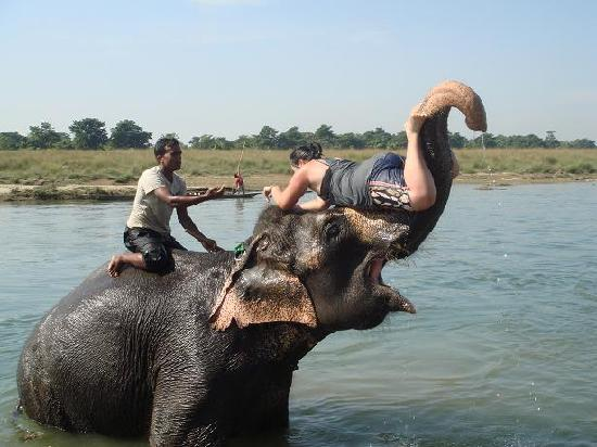 Chitwan National Park, Nepal: Being lifted up via Elephants trunk