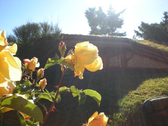 Cabanas La Deseada: Los techos de las cabañas!