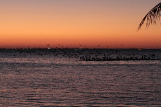 The seagulls roost at night on the water, hence Playa Gaviota