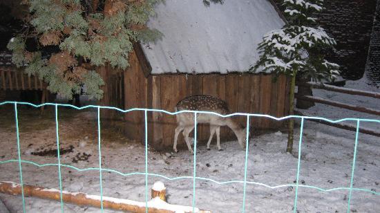 Jasna Gora : villaggio di Natale