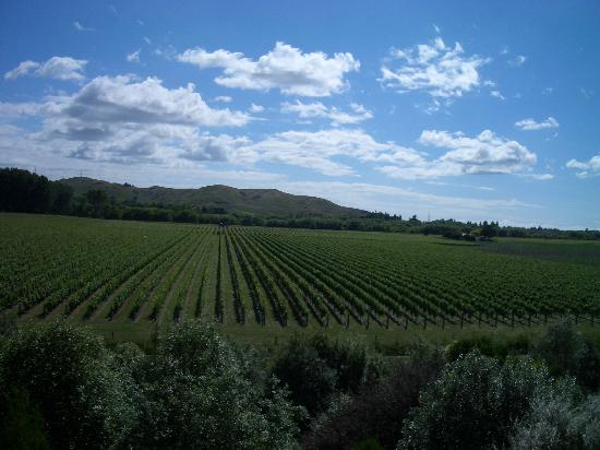 Breckenridge Lodge: vineyard view