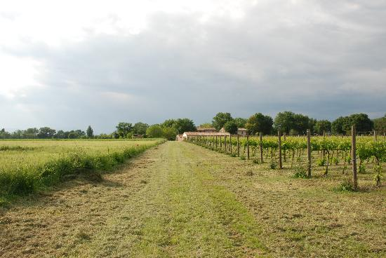 Agriturismo Podere La Fornace: View from the vineyard