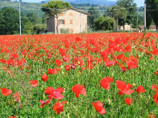 Agriturismo Podere La Fornace: Umbria in Springtime