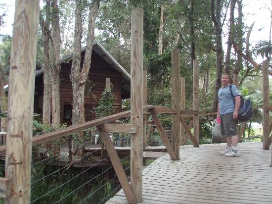 Melaleuca Surfside Backpackers: Tree top ramp leading to communal lounge/kitchen