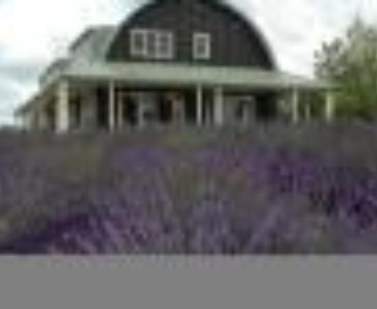Coatesville Lavender Hill Luxury Bed & Breakfast Thumbnail