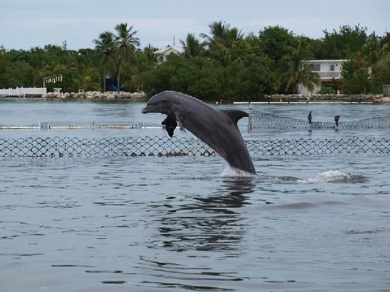 Dolphin Research Center: Dolphin fun #1