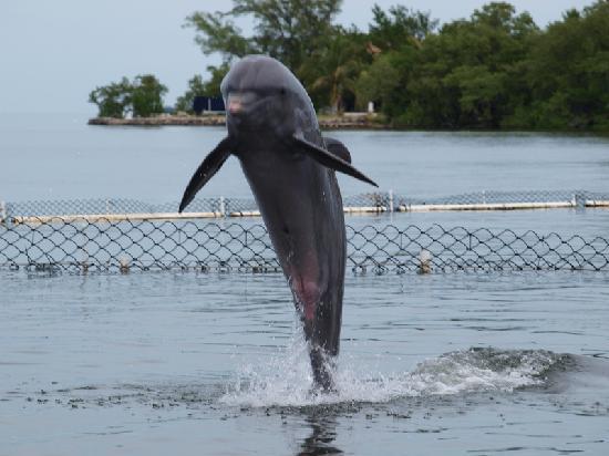 Dolphin Research Center : Dolphin fun #2