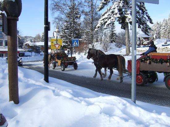 Hotel Sonneneck: auch mit der Kutsche kann man unterwegs sein.
