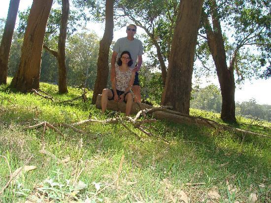 Hotel Parque Oceanico: Lindo bosque, mas necessita maiores cuidados